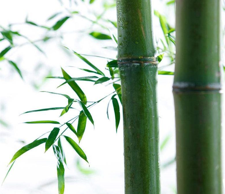 Bamboo features