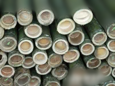 What are the structures of bamboo